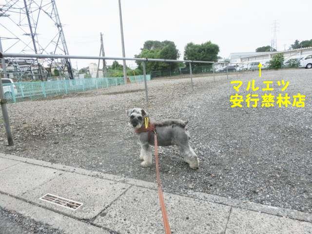 CIMG7714.jpg