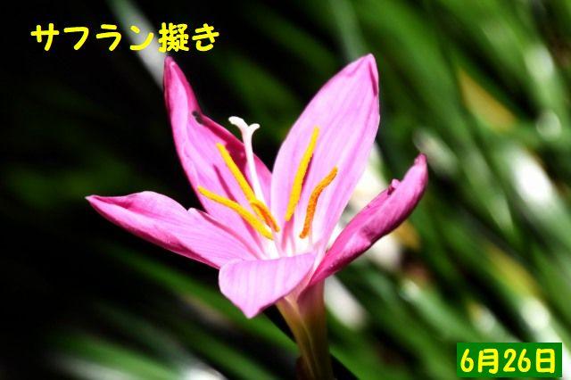 JPG_5085.jpg