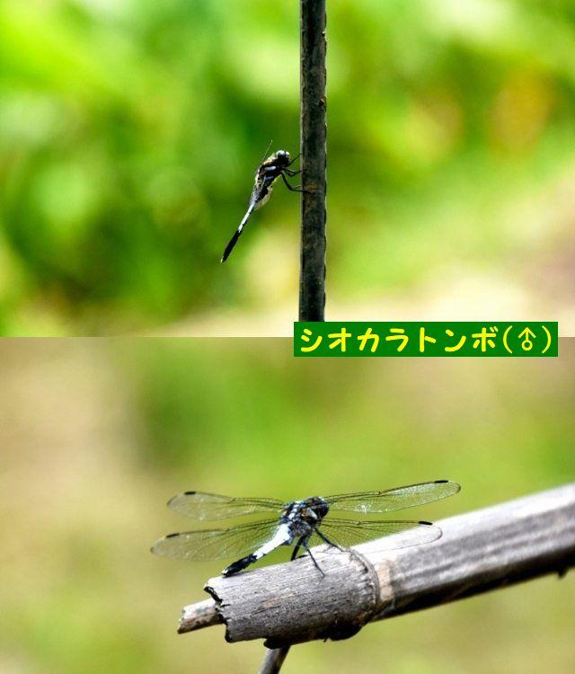 JPG_5266.jpg