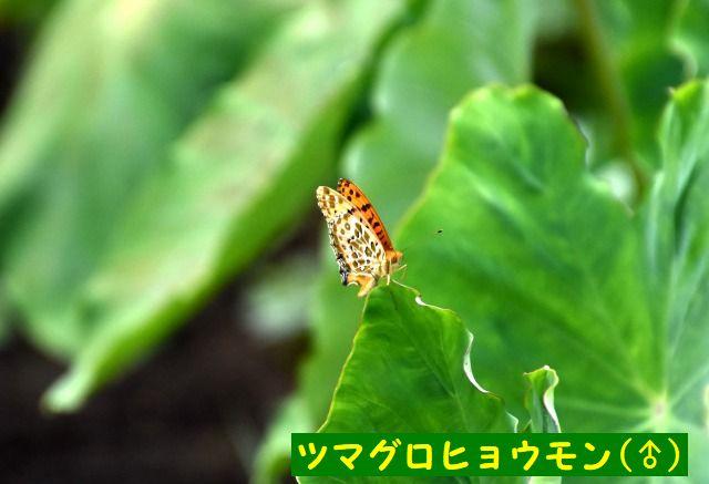 JPG_5269.jpg