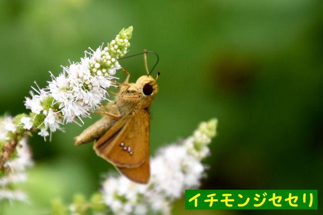 JPG_5354.jpg